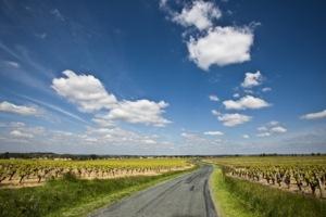 Vignes à Monnières